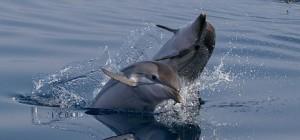 silvia_bonizzoni__oceancare_2012_8533_web_697